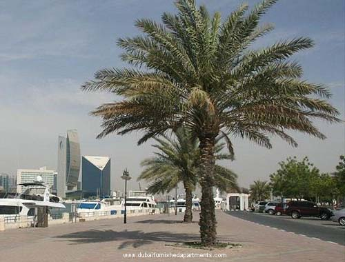 Bur Dubai Pic - Bur Dubai is hot for apartments and Hotels booking
